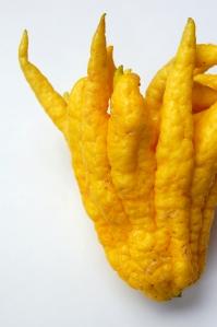 Buddha's Finger Citron