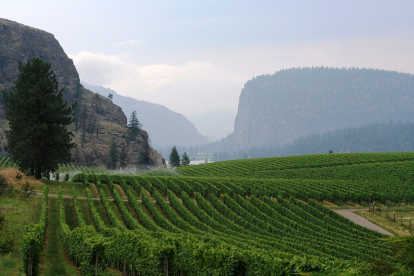 Blue Mountain Winery, Okanagan Falls, BC